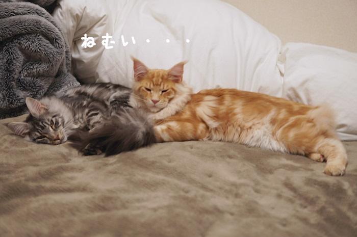 f:id:chikojirou:20180325211336j:plain