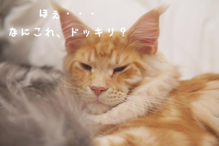 f:id:chikojirou:20180325211402j:plain