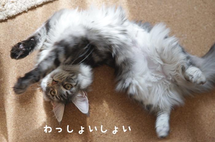 f:id:chikojirou:20180328215311j:plain