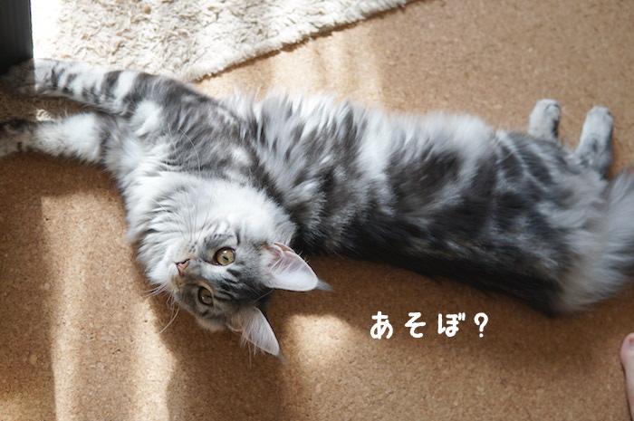 f:id:chikojirou:20180328215323j:plain