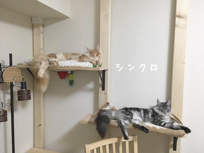 f:id:chikojirou:20180402214531j:plain