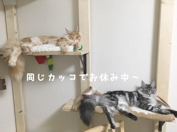 f:id:chikojirou:20180402214542j:plain