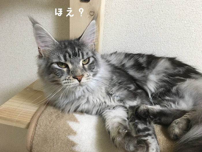 f:id:chikojirou:20180406213636j:plain