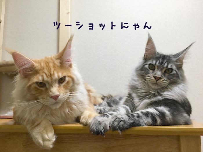 f:id:chikojirou:20180406213810j:plain