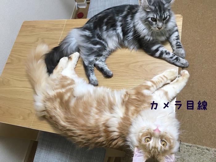f:id:chikojirou:20180406213919j:plain