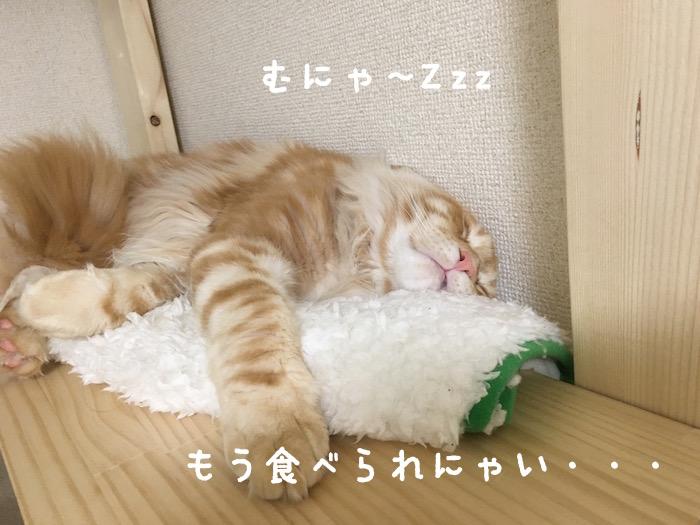 f:id:chikojirou:20180411214126j:plain