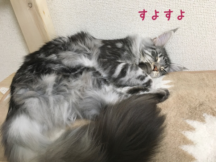 f:id:chikojirou:20180411214157j:plain