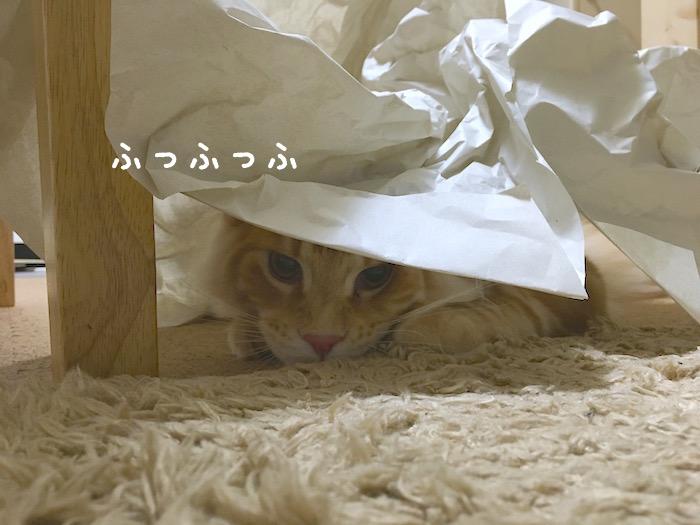 f:id:chikojirou:20180412215608j:plain