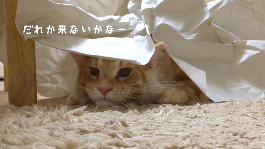 f:id:chikojirou:20180412215619p:plain
