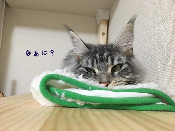 f:id:chikojirou:20180425211614j:plain
