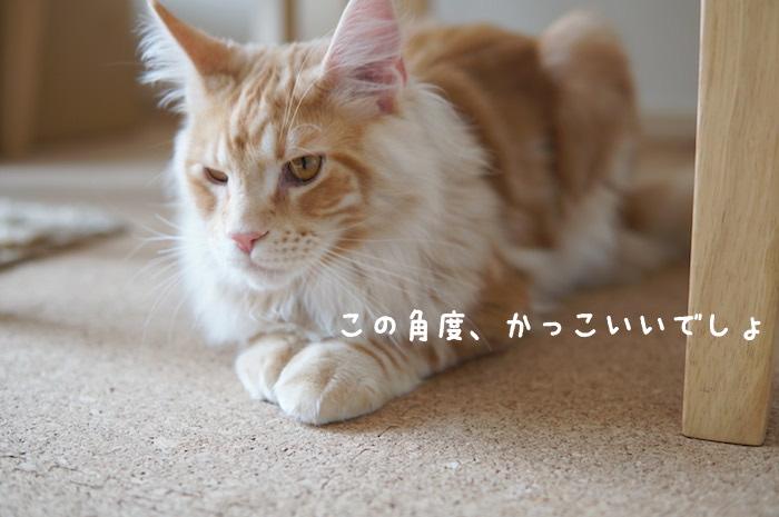 f:id:chikojirou:20180425211644j:plain