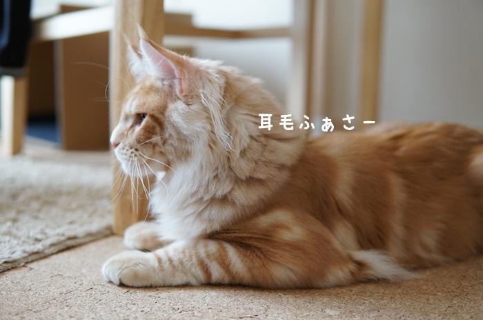 f:id:chikojirou:20180425211658j:plain