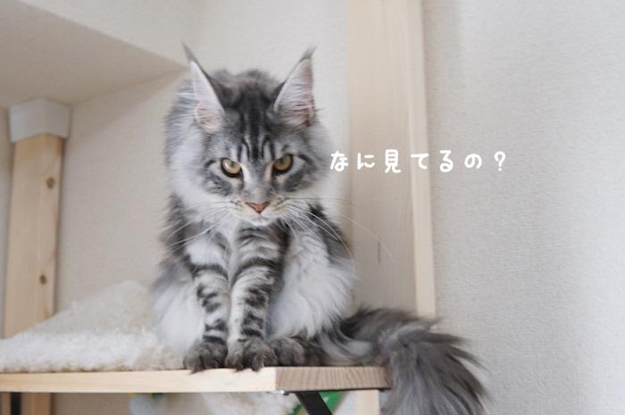 f:id:chikojirou:20180425211843j:plain