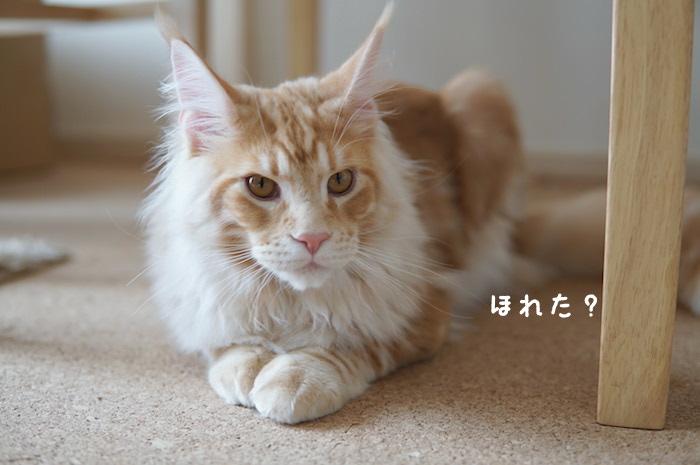 f:id:chikojirou:20180425212815j:plain