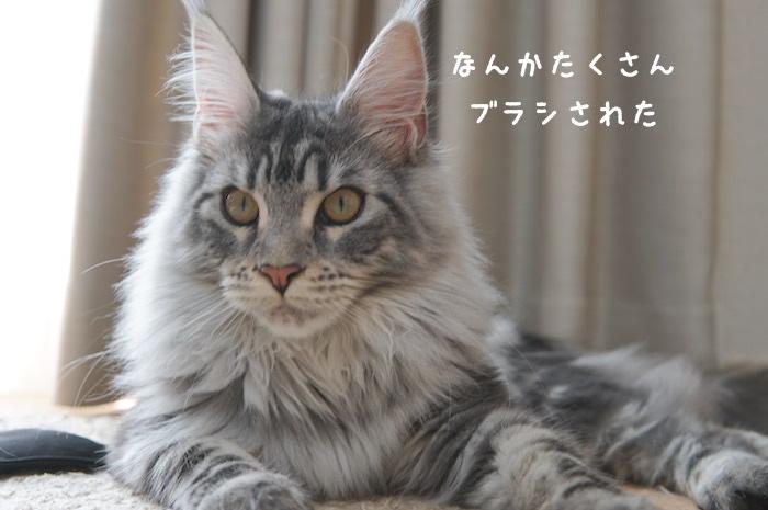 f:id:chikojirou:20180430214603j:plain