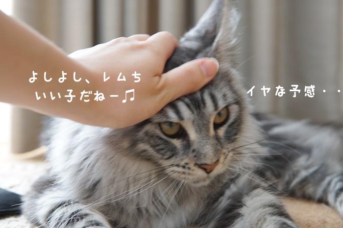 f:id:chikojirou:20180430214614j:plain