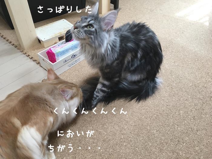 f:id:chikojirou:20180430214738j:plain