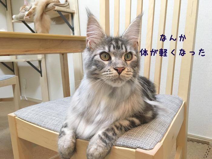 f:id:chikojirou:20180430214817j:plain