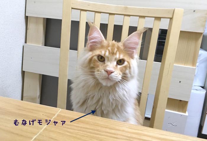 f:id:chikojirou:20180502220201j:plain