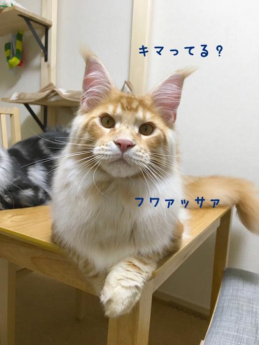 f:id:chikojirou:20180502220233j:plain