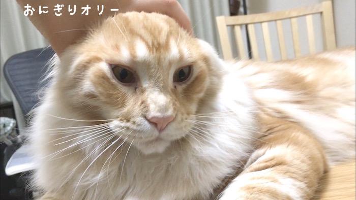 f:id:chikojirou:20180502220256j:plain
