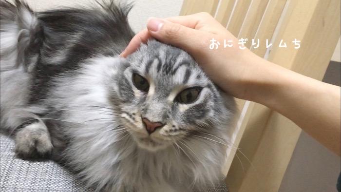f:id:chikojirou:20180502220312j:plain
