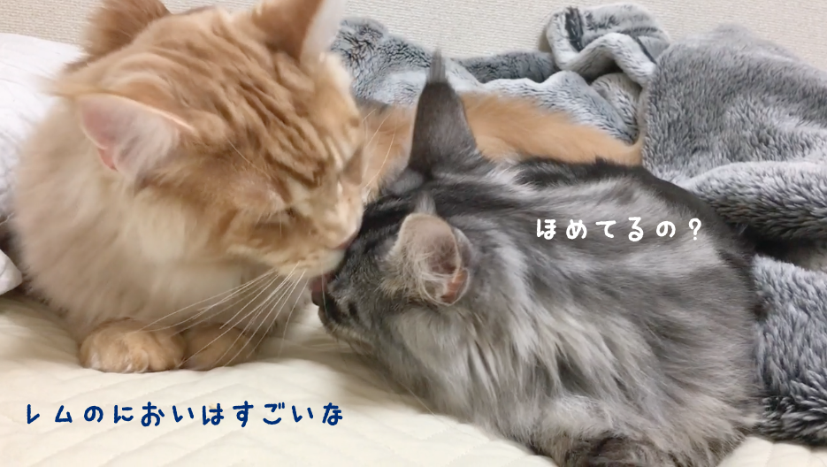 f:id:chikojirou:20180502220615p:plain