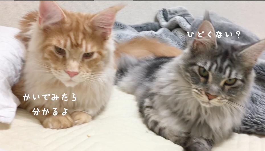 f:id:chikojirou:20180502220631p:plain