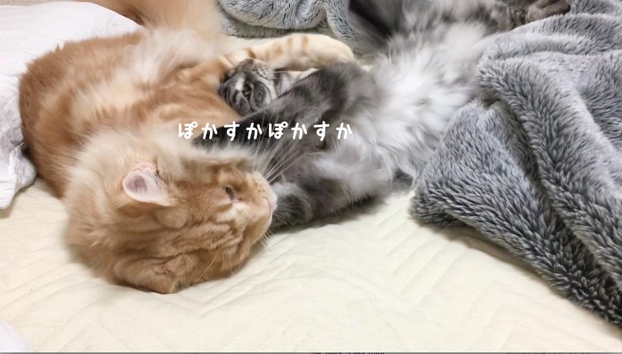 f:id:chikojirou:20180502220649p:plain