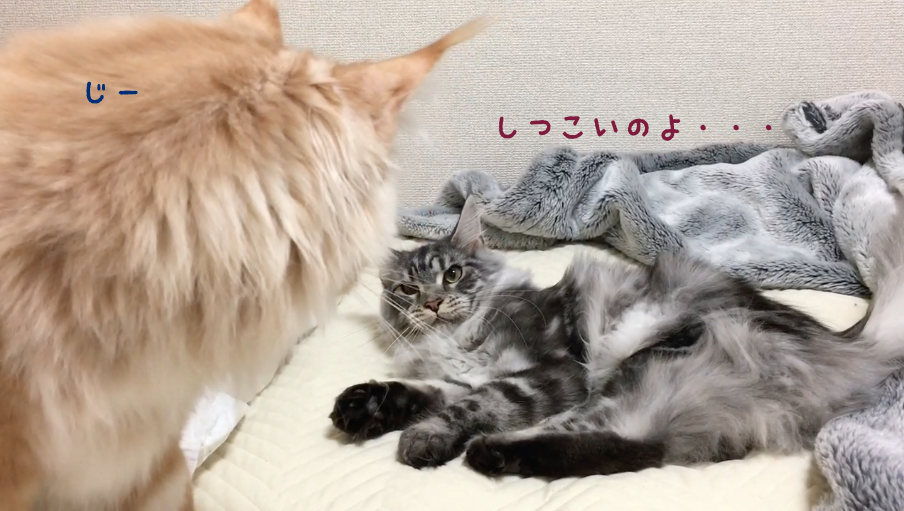 f:id:chikojirou:20180502220736p:plain