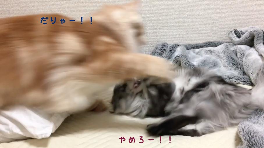 f:id:chikojirou:20180502220753p:plain