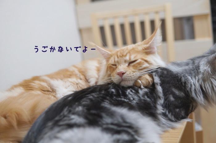 f:id:chikojirou:20180502220844j:plain