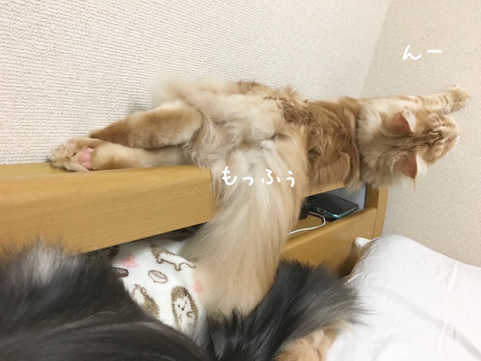 f:id:chikojirou:20180516213001j:plain
