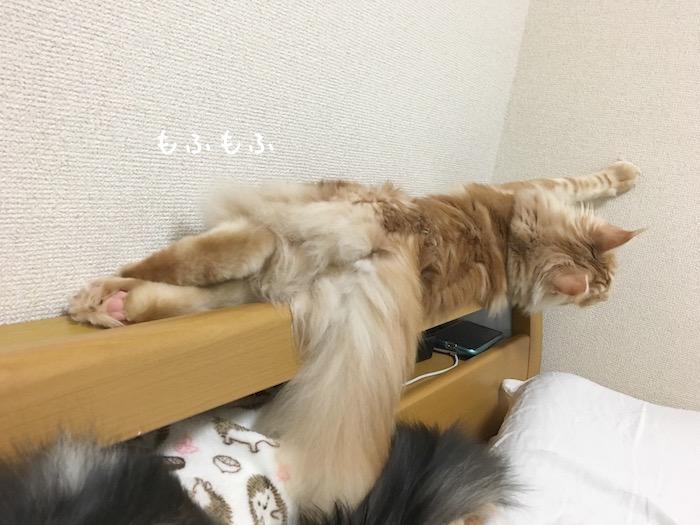 f:id:chikojirou:20180516213013j:plain