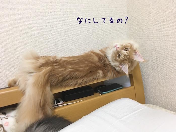 f:id:chikojirou:20180516213037j:plain