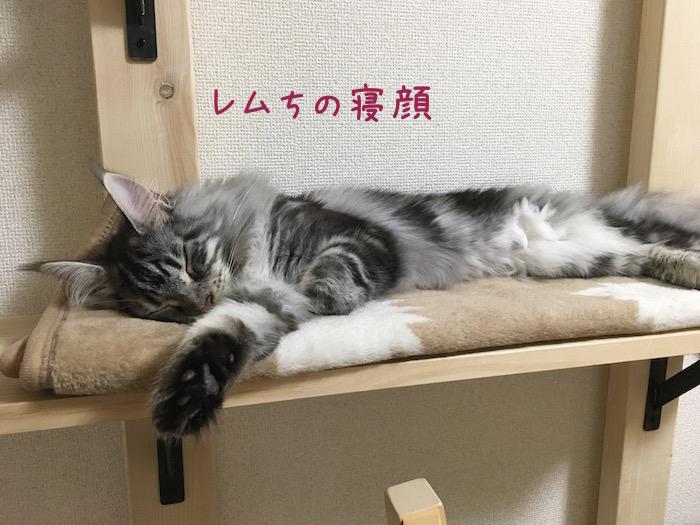f:id:chikojirou:20180516213124j:plain