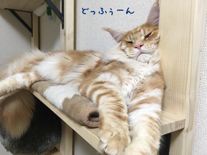 f:id:chikojirou:20180516213136j:plain
