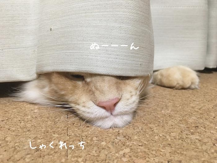 f:id:chikojirou:20180516213314j:plain