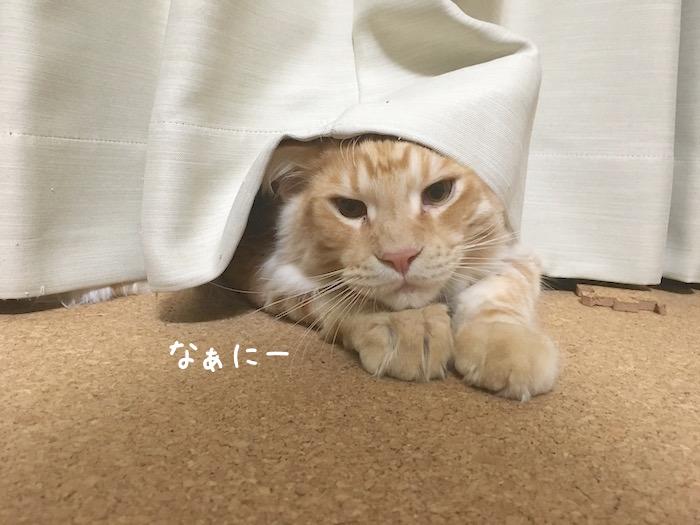 f:id:chikojirou:20180516213328j:plain