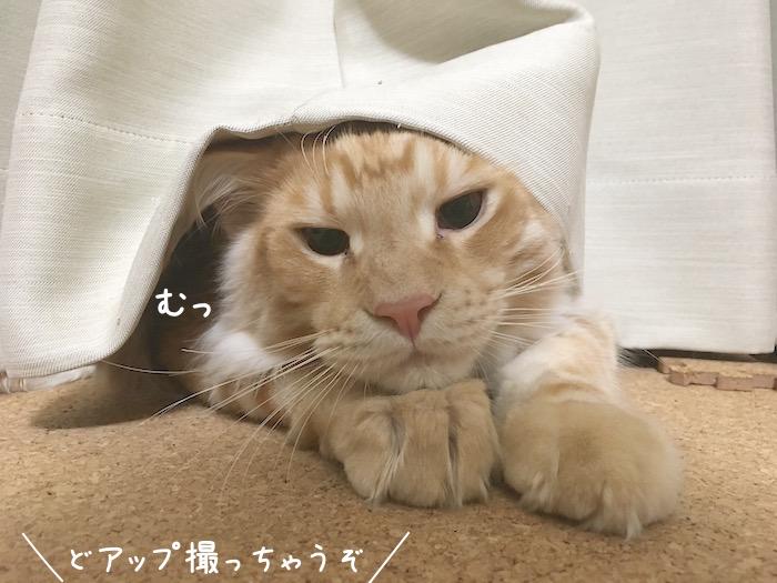 f:id:chikojirou:20180516213343j:plain