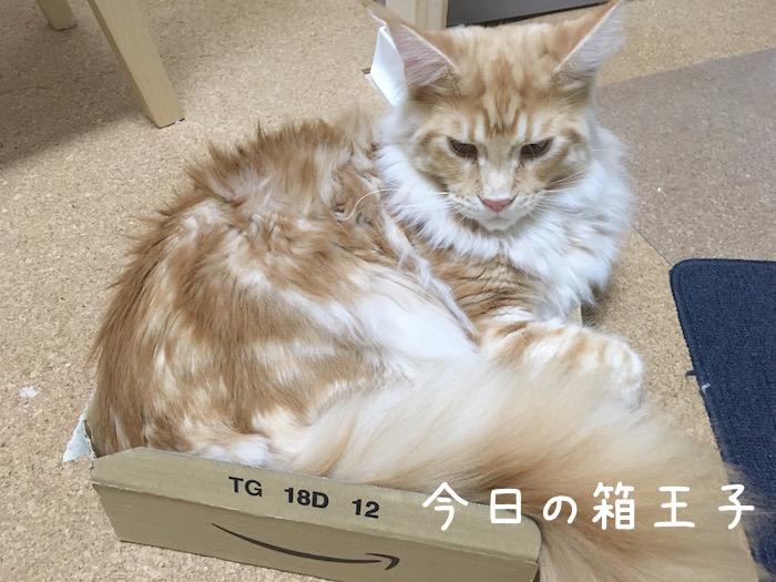 f:id:chikojirou:20180518222825j:plain