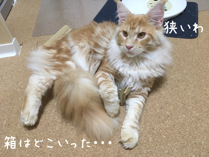 f:id:chikojirou:20180518222923j:plain