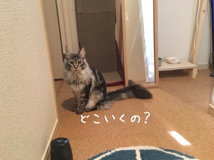 f:id:chikojirou:20180518222938j:plain