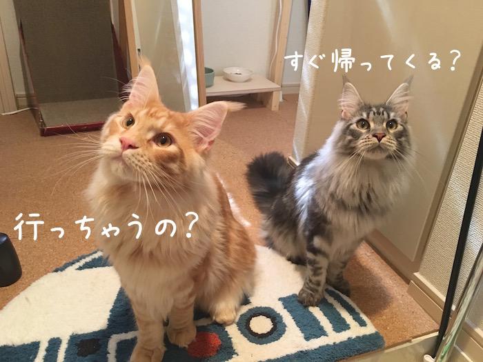 f:id:chikojirou:20180518223034j:plain