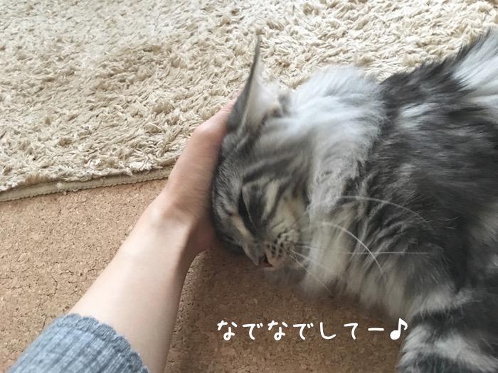 f:id:chikojirou:20180518223059j:plain