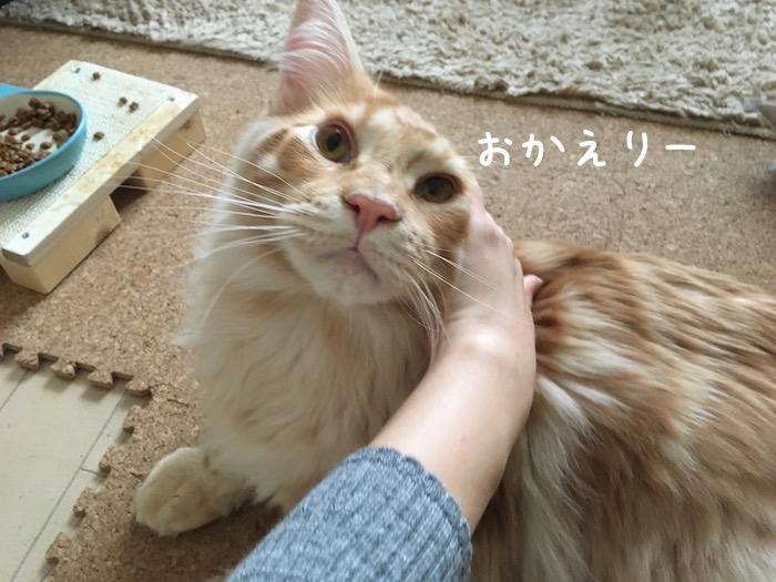 f:id:chikojirou:20180518223131j:plain