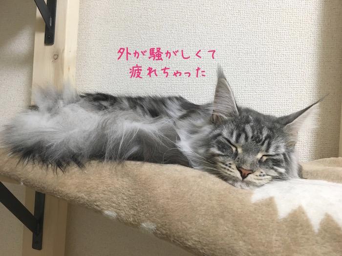 f:id:chikojirou:20180520210828j:plain