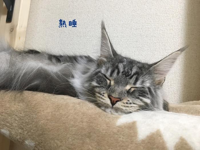 f:id:chikojirou:20180520210843j:plain