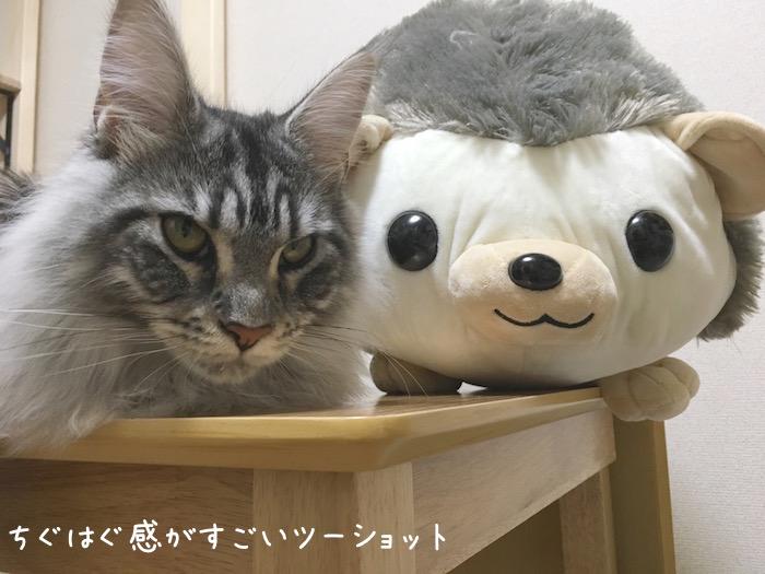 f:id:chikojirou:20180520210957j:plain
