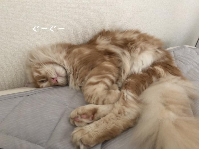 f:id:chikojirou:20180625220521j:plain